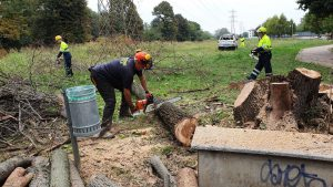 Taglio alberi presso Parco Nord Vignate 06 ottobre 2019