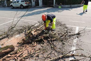 Taglio alberi post temporale