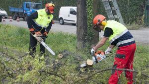 Taglio alberi 06 aprile 2019